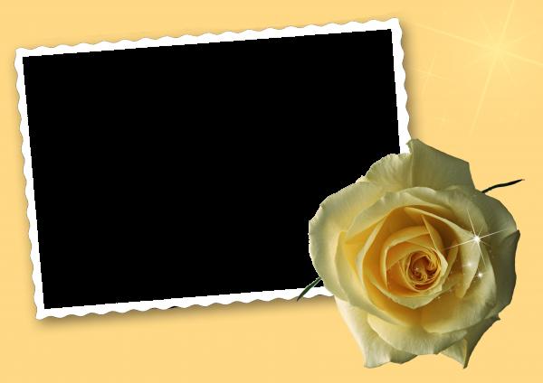 Khung hình đẹp để ghép ảnh chủ đề hoa hồng