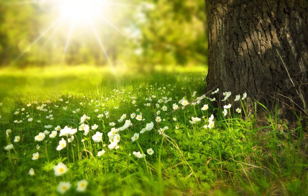 Ảnh nền đẹp cho máy tính về cỏ cây và thiên nhiên