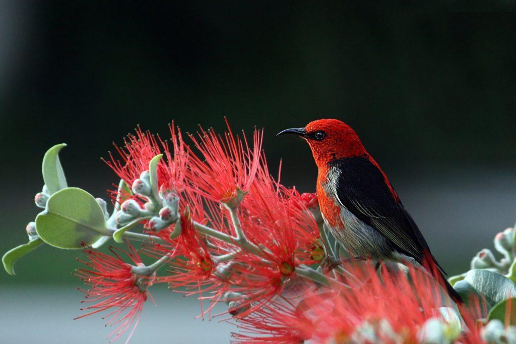 Hình ảnh thiên nhiên đẹp nhất của các loài chim dành cho máy máy tính và laptop