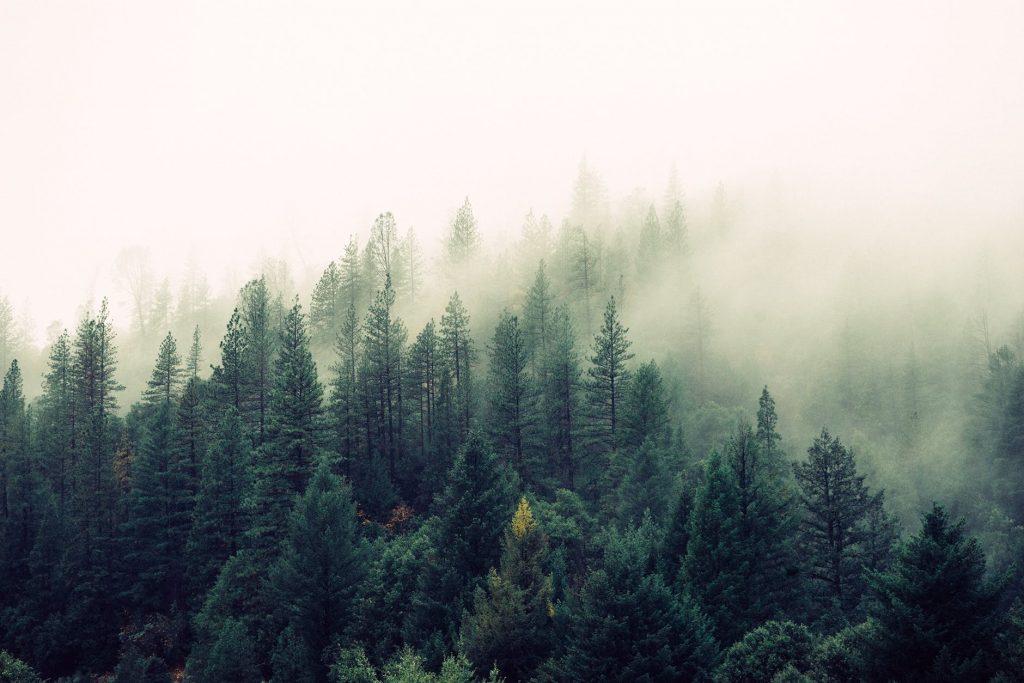 Hình nền máy tính 2020 khung cảnh hùng vĩ của núi rừng