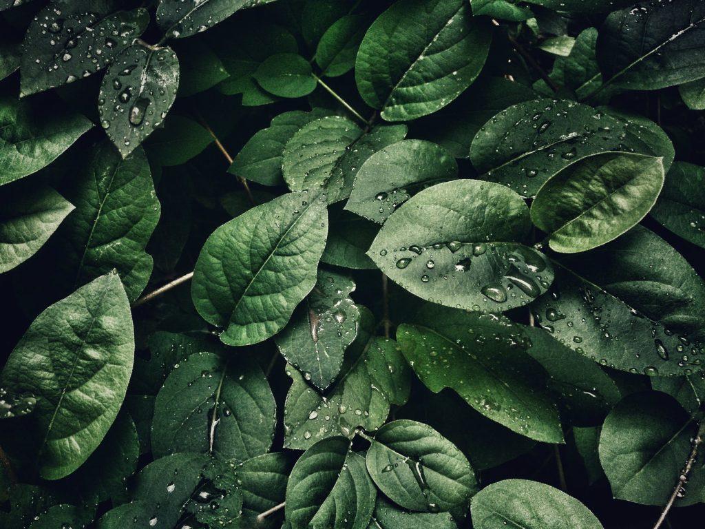 Tổng hợp ảnh đẹp thiên nhiên dùng làm màn hình nền