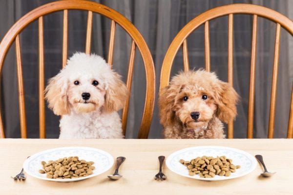 Thức ăn hạt khô là dạng thức ăn khô, rất tiện lợi khi sử dụng