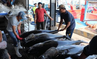 Cá ngừ đại dương sỉ giá bao nhiêu 2020?