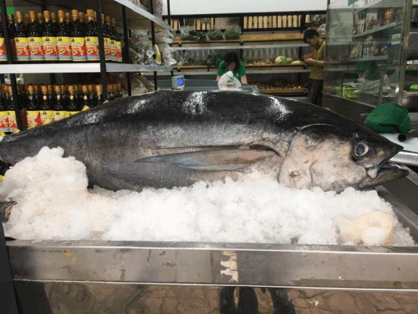 Cá ngừ đại dương tươi ngon