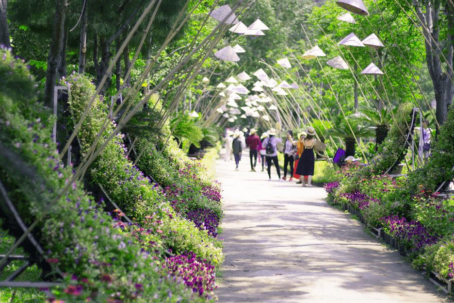 Tour Hoa Lan Đảo Khỉ độc đáo