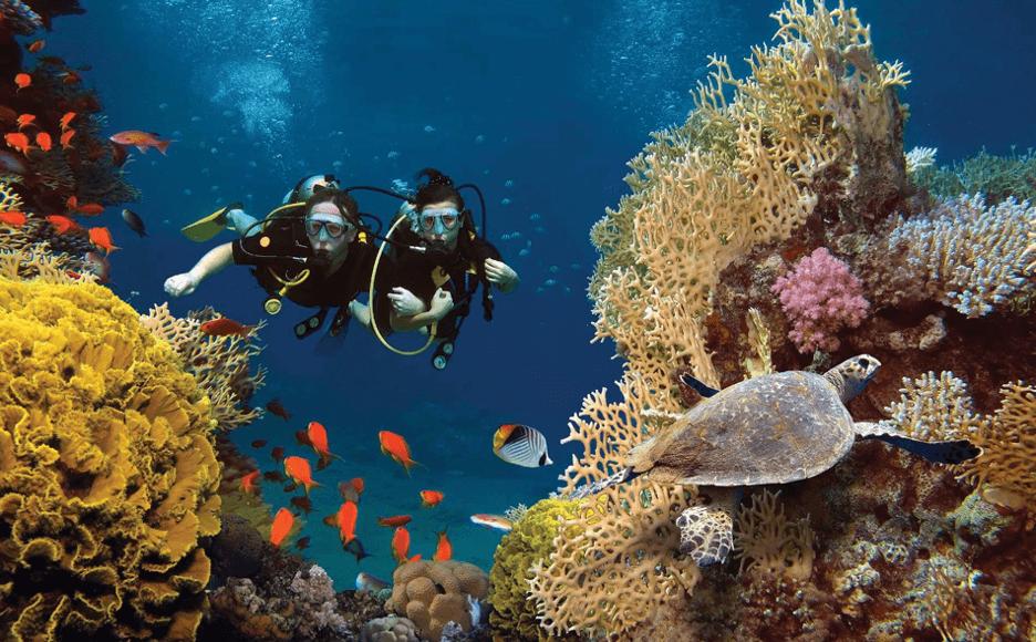 Tour lặn biển Hòn Mun nên khám phá mỗi khi đến biển Nha Trang