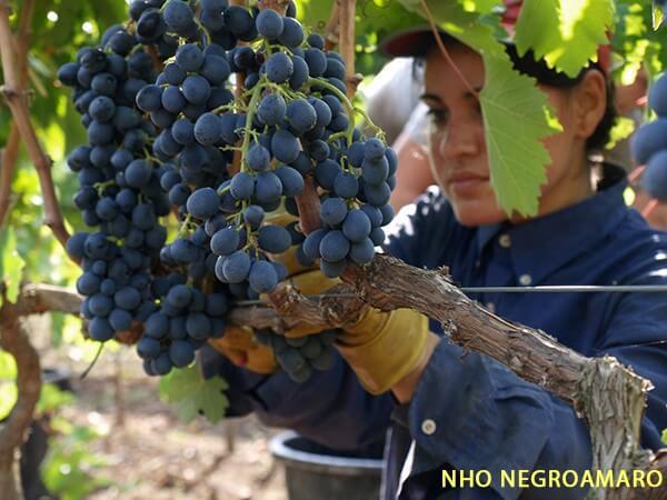 Điều kiện tự nhiên của Puglia