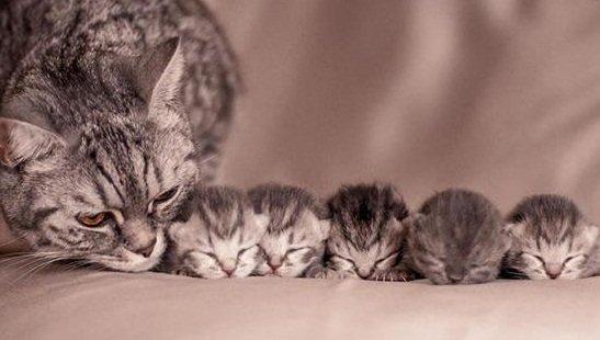 Điềm báo khi mơ thấy mèo đẻ ra sao?
