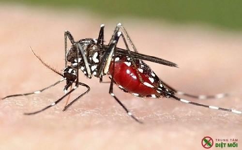 Các nguy hiểm có thể gặp do muỗi đốt