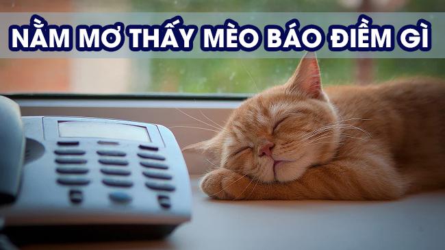 Mơ thấy con mèo báo điềm gì?