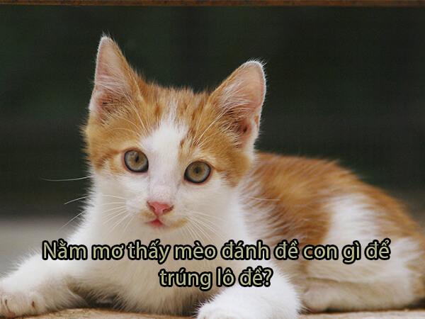 Nằm mơ thấy mèo đánh con gì dễ trúng?