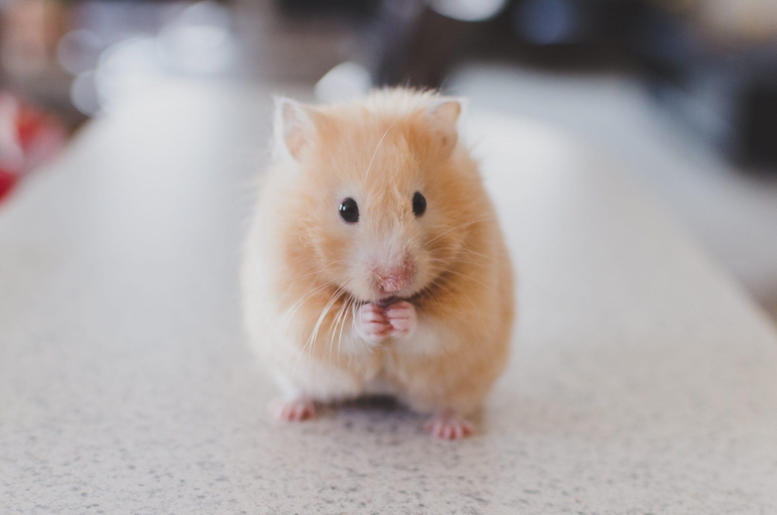 Nằm mơ thấy con chuột đánh con gì