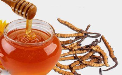 Đông Trùng Hạ Thảo ngâm mật ong cho người bệnh huyết áp